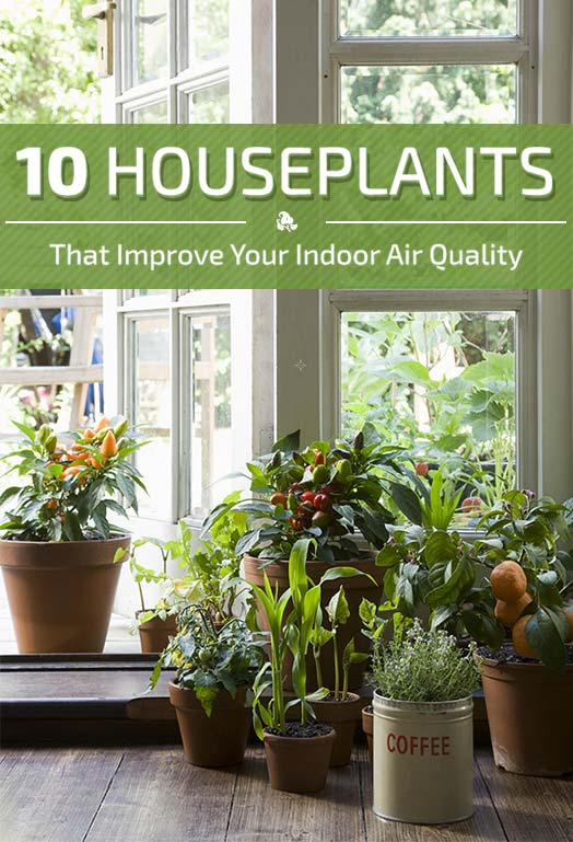 10 Houseplants That Improve Indoor Air Quality