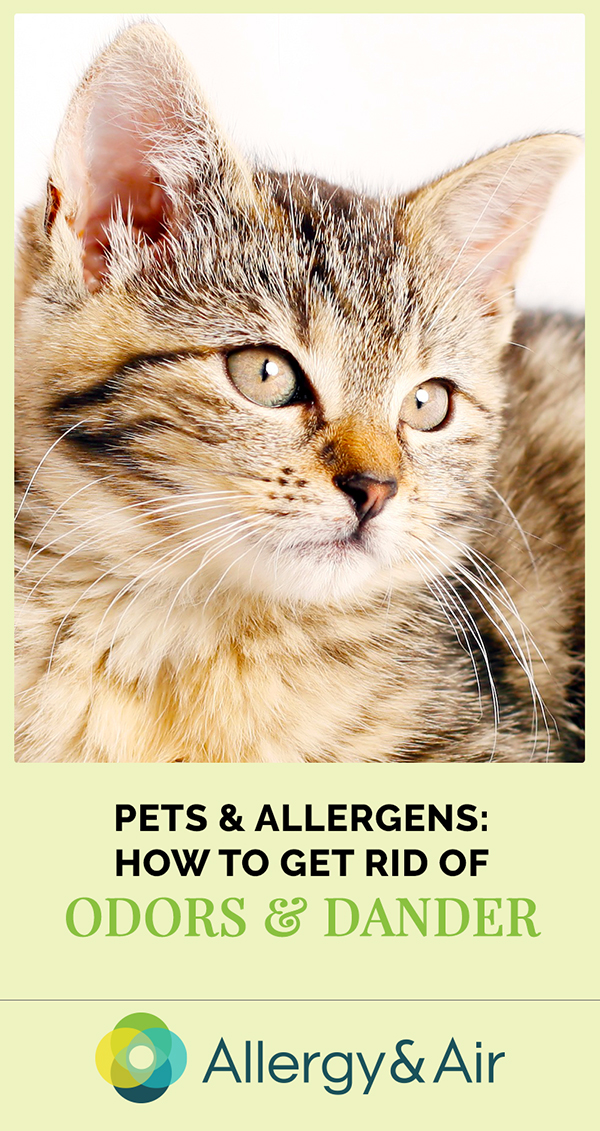 Pets & Allergens - How to Get Rid of Odors and Dander