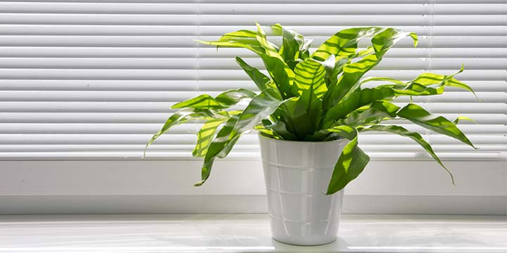8 Ways to Tell The Quality of Your Indoor Air