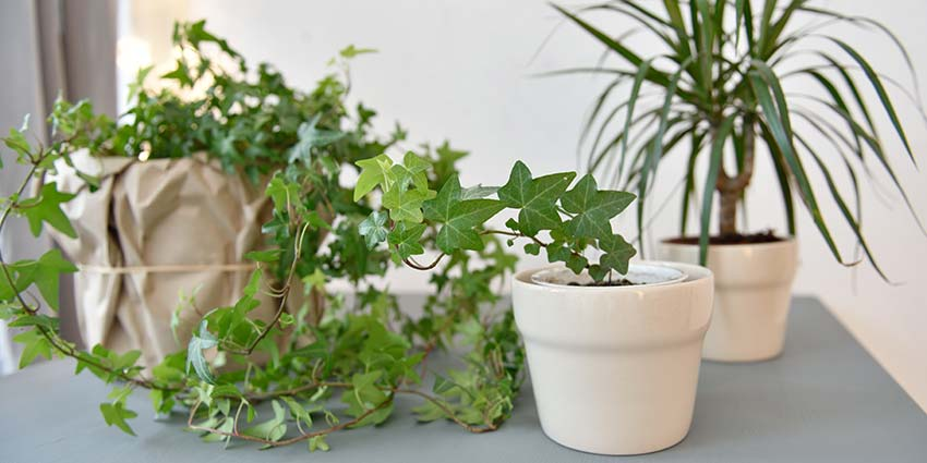 Green Your Home 10 houseplants that improve indoor air quality